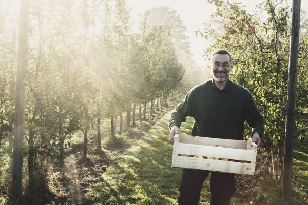 Smiling man standing in apple orchard, holding crate with apples, looking at camera. Apple harvest in autumn.